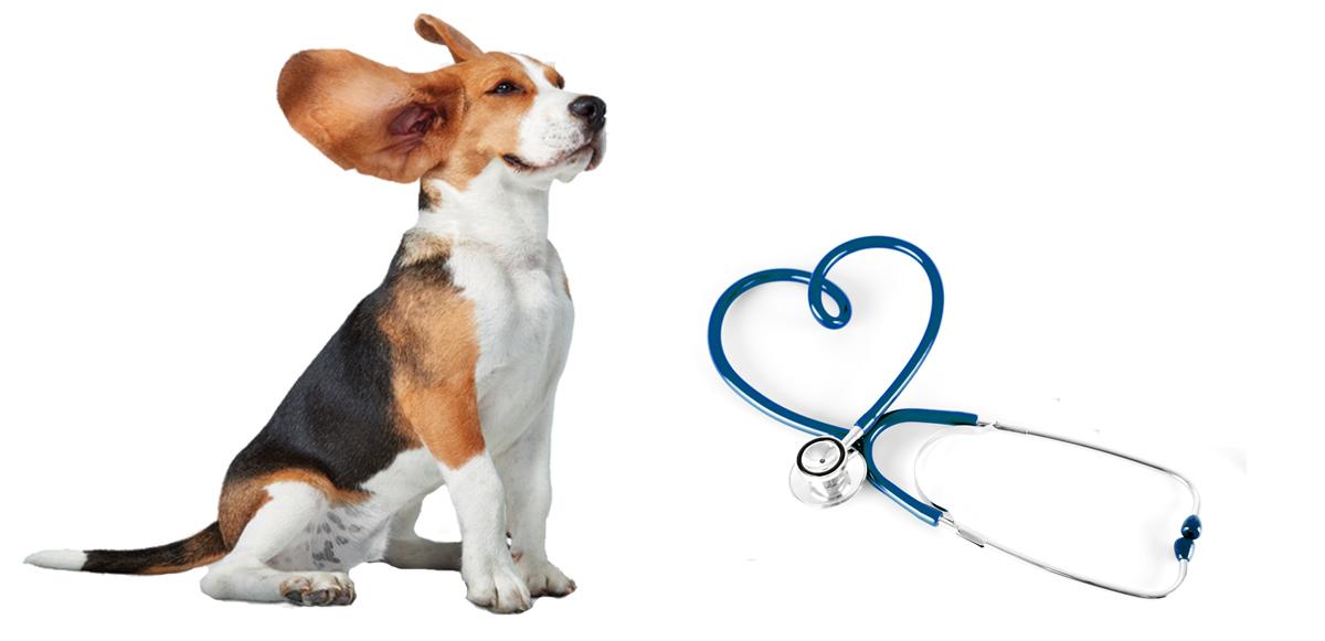 Ветеринарная клиника Надежда